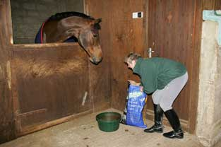 Sheila feeding 4s in stable