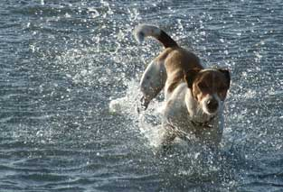 William dog in water